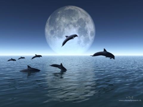 [delfines]